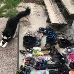 cat-steals-shoes-jordan-the-feline-cat-burglar-32