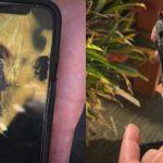 iPhone X ekriksi 2