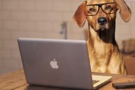 dog-2983021_1920